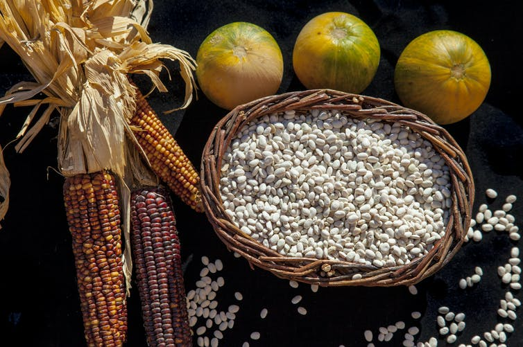 Returning the 'three sisters' — corn, beans and squash — to Native American farms nourishes people, land and cultures